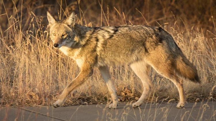 How to coexist with wildlife in urban and suburban areas