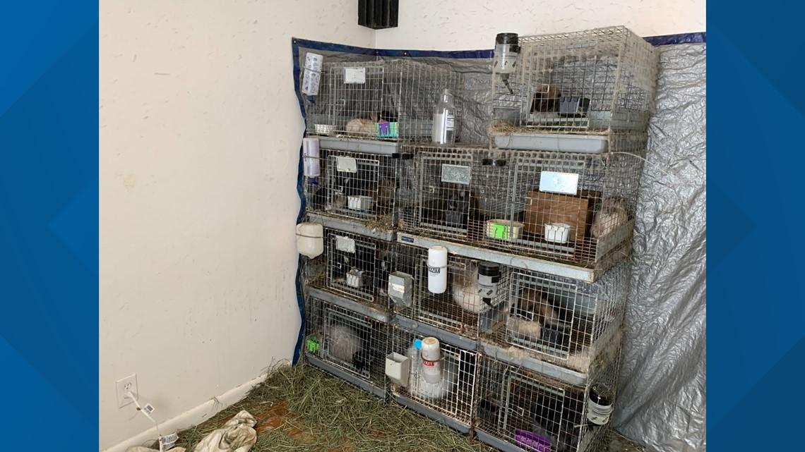 Neighbors Cannot U0026 39 Fathom U0026 39 The Animal Cruelty Neglect