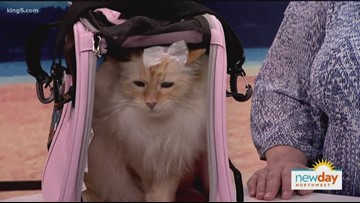 Make simple toys for your cat that will provide hours of entertainment - New Day Northwest