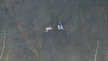 1 person, 2 dogs rescued from steep Tacoma hillside