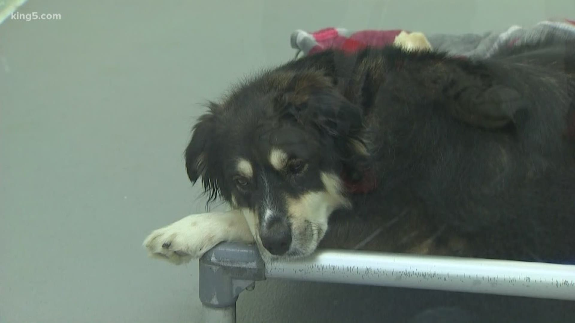 Shelter Overwhelmed By Dogs Seized In