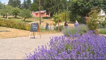 5 Washington islands to visit this summer | king5 com