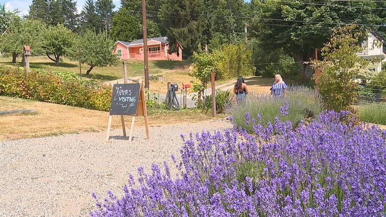 vashon lavender farm