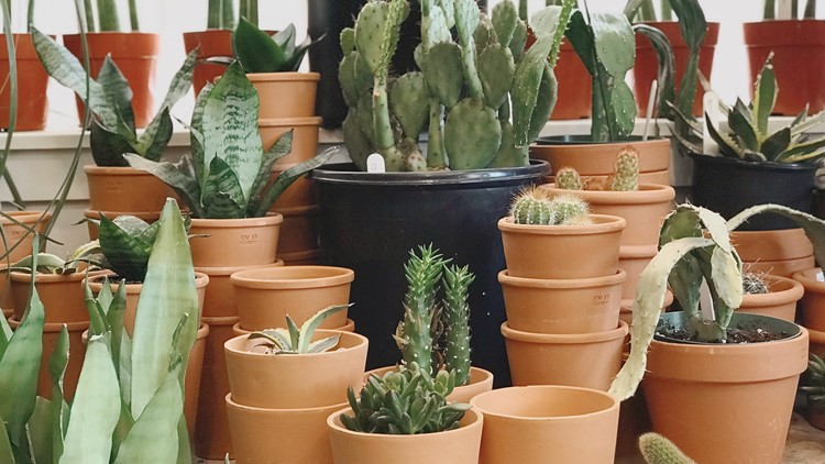 Plant Shop has two locations: Central District and Capitol Hill.