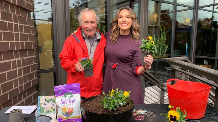 How to plant tulip bulbs now for beautiful blooms in the spring!