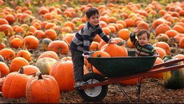 9 local activities to check out with your kids this fall