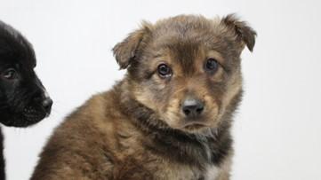Pet adoptions spike during Washington's coronavirus crisis
