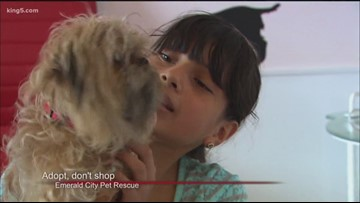 Adopt, don't shop at Emerald City Pet Rescue