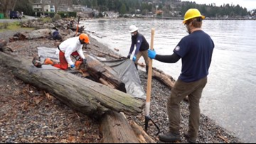 Toxic wood removed from West Seattle shoreline