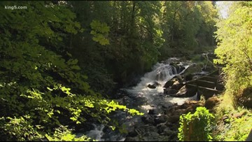Tumwater Falls Park in Olympia is the perfect place to soak up nature this fall - KING 5 Evening