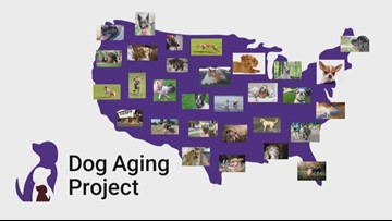 UW part of largest-ever study on aging in dogs