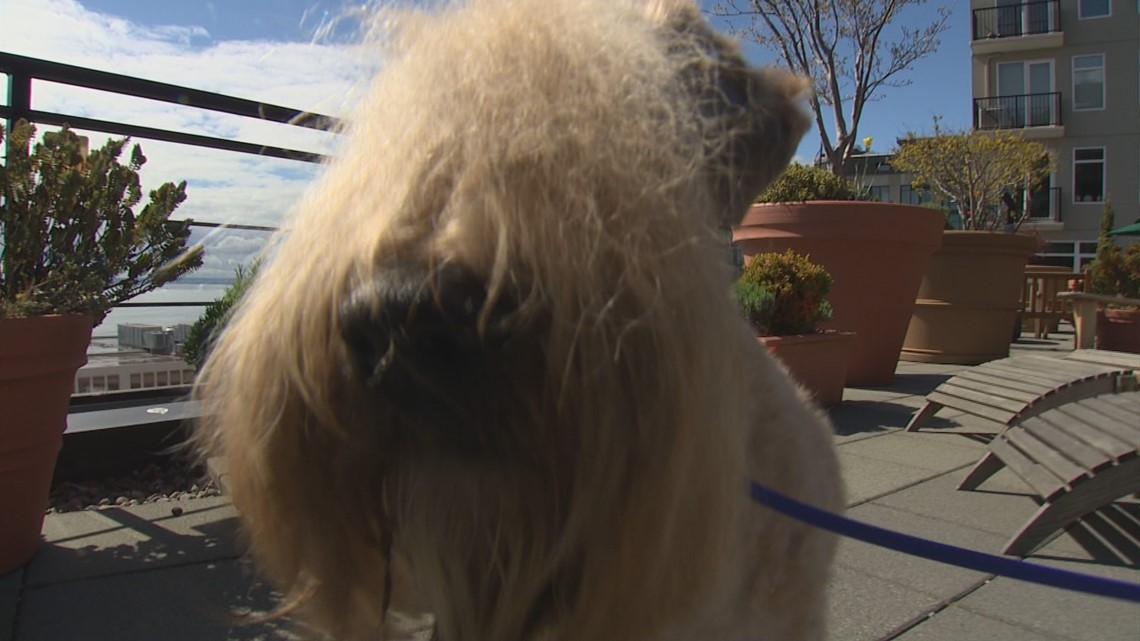 Local champion competes in Beverly Hills Dog Show