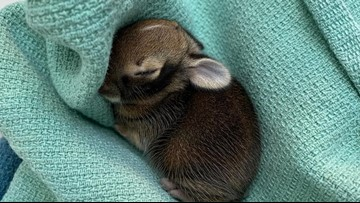 Donate your old bedding to orphaned animals at this Washington wildlife center