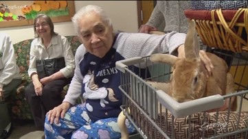 Visiting Hooves' mini-horses and fuzzy bunnies bring joy to nursing home residents - KING 5 Evening
