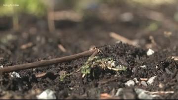 Back to Earth: Washington set to allow 'human composting'
