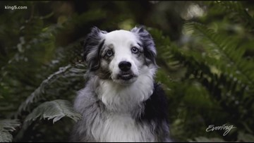 Seattle's Nancy LeVine shares tips on photographing your pup like a pro - KING 5 Evening
