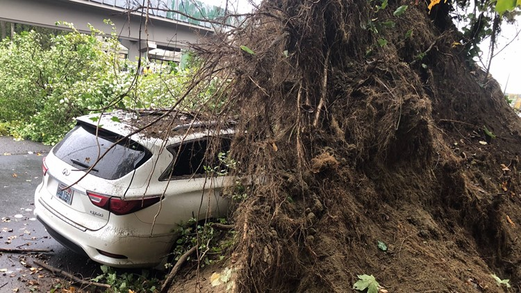Large tree hits vehicle, blocking Bellevue Way SE during Monday commute