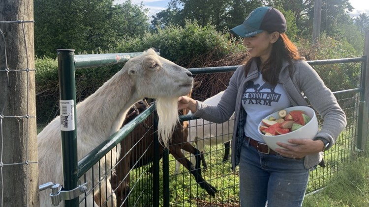 Thousands of dollars in equipment stolen from Maple Valley animal sanctuary