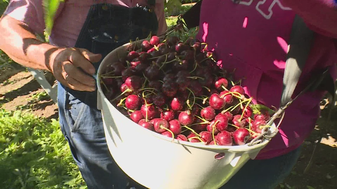 Washington farmworkers could get overtime pay under proposal