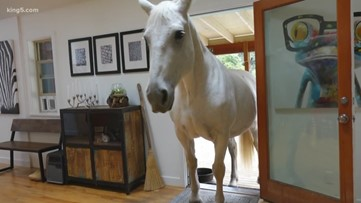 The 'Porch Unicorn:' Duvall man forms unique bond with his horse after an accident