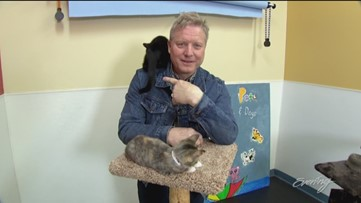 Fri, 6/21, Homeward Pet Adoption Center in Woodinville, Baby Animal Special, Full Episode, KING 5 Evening