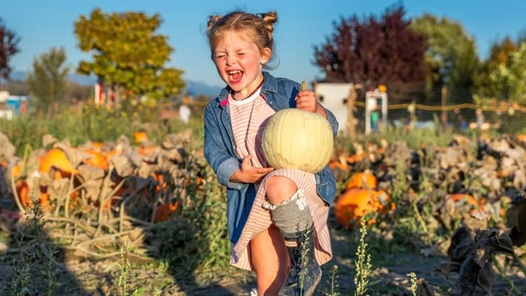 Check out these 7 Seattle-area pumpkin patches to celebrate fall