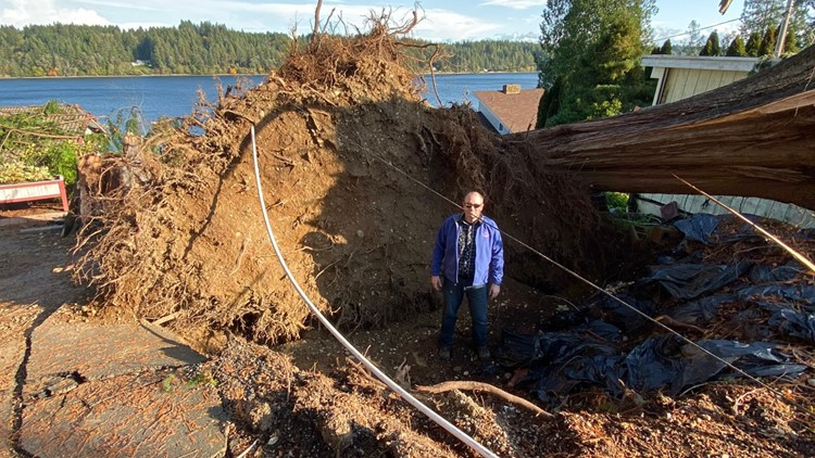 Tornado cause trees to uproot in Shelton area