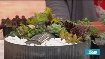 Think outside the pot with the Savvy Gardner - New Day Northwest