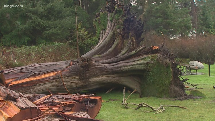 Deception Pass windstorm damage looms over camping season