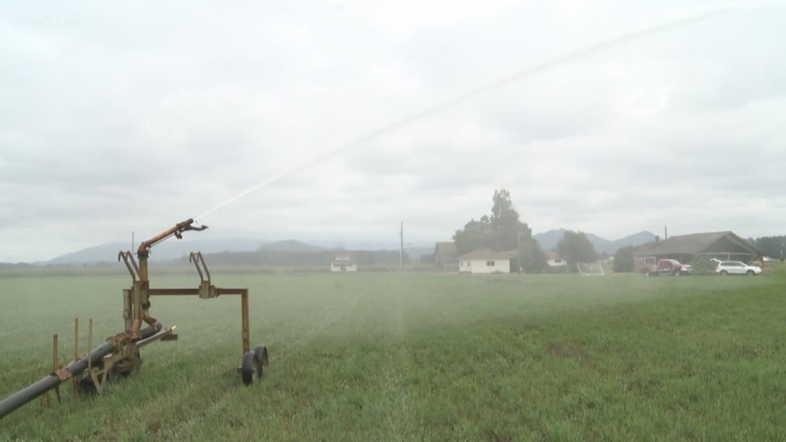 Emergency water rights transfer saves 1,000 acres of Skagit Valley farmland