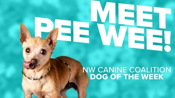 Canine Rescue of the Week: Pee Wee