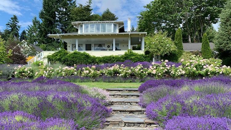 You can stay on a lavender farm on Vashon Island
