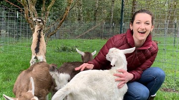 A Baby Goat Date might be the best date you ever go on - KING 5 Evening