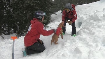 Reasons why we love ski patrollers in the Pacific Northwest