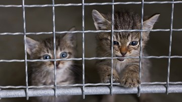 Olympia considers banning sale of cats, dogs at pet shops
