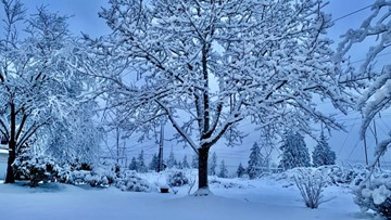 Schools canceled, delayed as arctic blast brings lowland snow to western Washington
