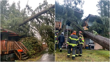 Man critically injured after tree falls on Renton apartments