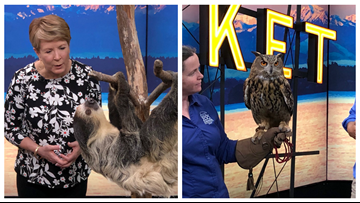 Visit all sorts of furry friends at the Point Defiance Zoo and Aquarium