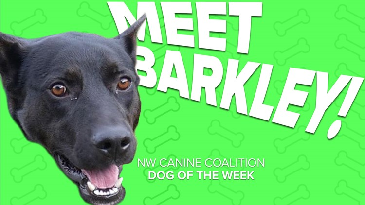 Canine of the Week: Barkley