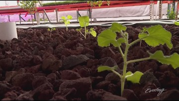 The Real Martian brings a taste of the Red Planet to rural Washington State - KING 5 Evening