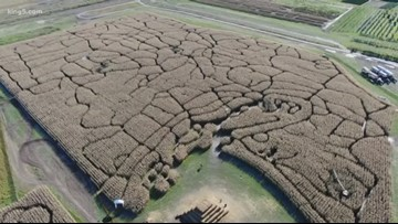 Corn maze in Snohomish made to resemble Washington state