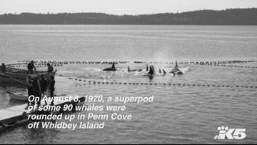 Photos: August 1970 orca capture in Penn Cove