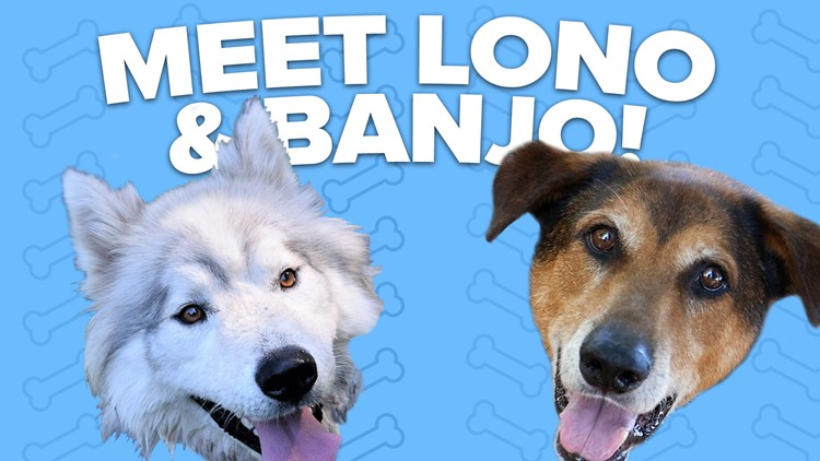 Canine Rescue of the Week: Banjo and Lono