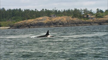 Whale watching isn't the only reason to head to Orcas Island