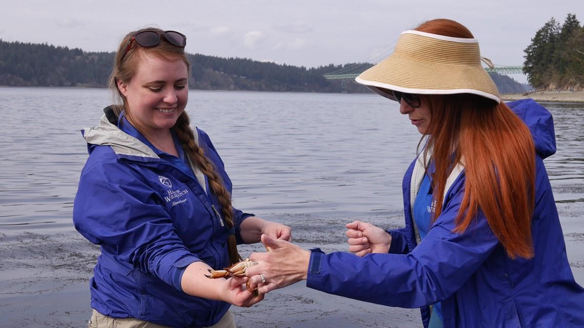 This Gig Harbor non-profit is teaching <b>TikTok</b> about the Salish Sea thumbnail