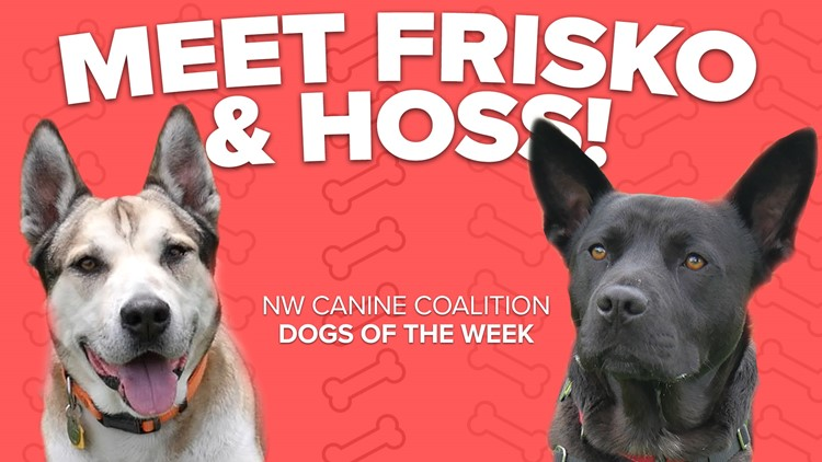 Canine Rescue of the Week: Frisko and Hoss