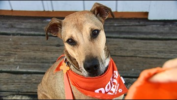Field trips help find forever homes for shelter dogs in Kitsap county
