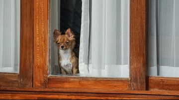 Does your dog have separation anxiety?