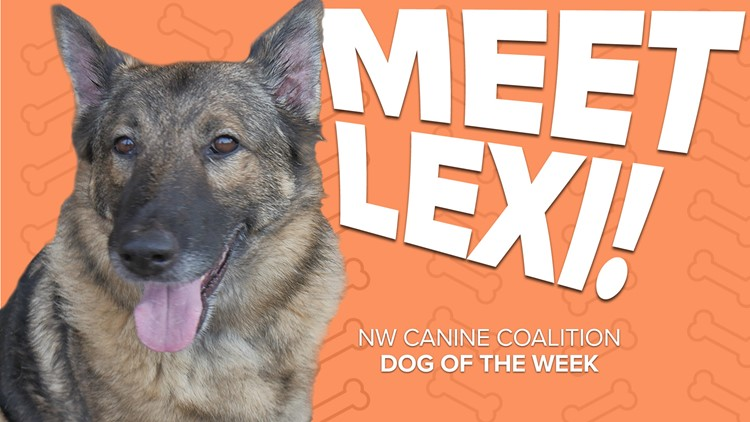 Canine Rescue of the Week: Lexi