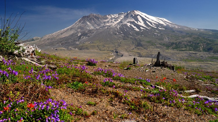 40 years of changes at Mount St. Helens: Life returns after eruption